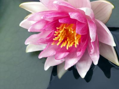 Mindfulness og Silva Metoden
